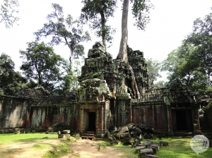 Ta Prohm tempel in Angkor!